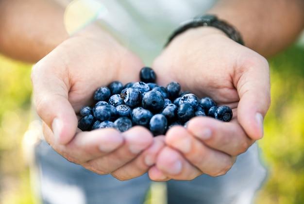 농부, 사람, 과일, 음식, 자연의 손에 블루 베리