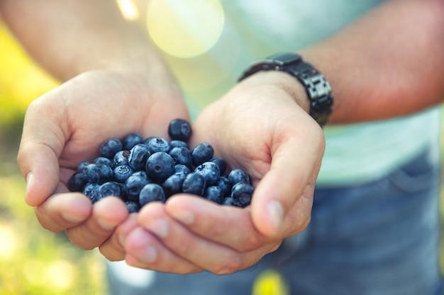 Черника в руках фермера, человека, фруктов, еды, природы