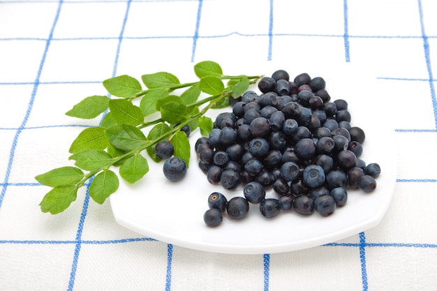 Blueberry on a plate
