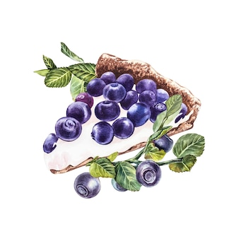 Blueberry. watercolor botanical illustration. hand drawn watercolor painting blueberry