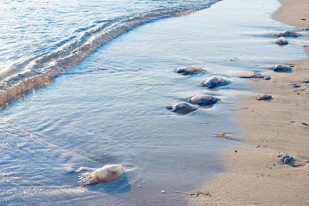 Bluebottles는 뉴 사우스 웨일즈, 호주 선택적 초점에있는 해변에서 씻어.