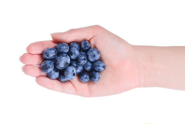 Bluepberry kept in hands isolated on white background.