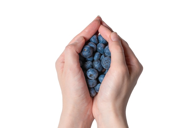 Bluepberry kept in woman hands isolated on white background. top view.