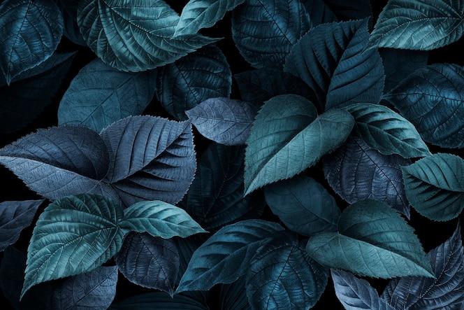 青みがかった植物の葉テクスチャ背景