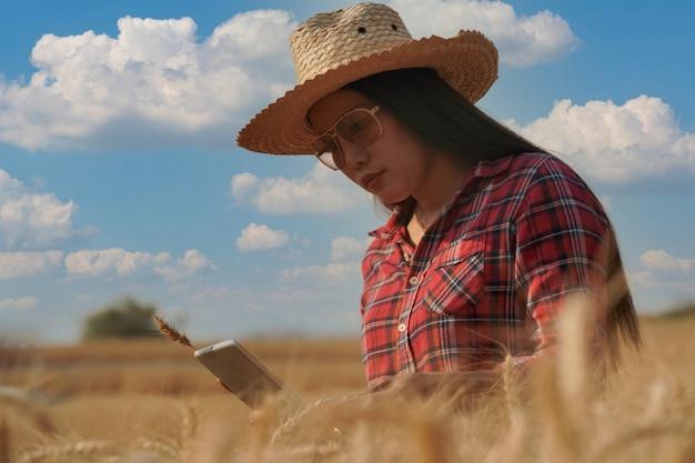 Размытие и крупные планы фермеров, использующих ноутбук для проверки качества ячменя на пшеничных полях, концепции отрасли и технологии