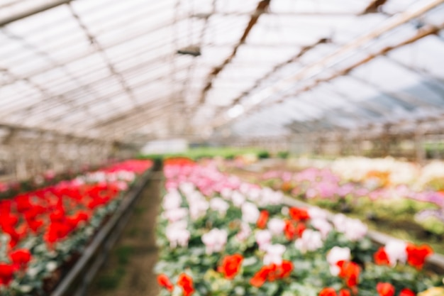 Blur background with flowers growing in greenhouse