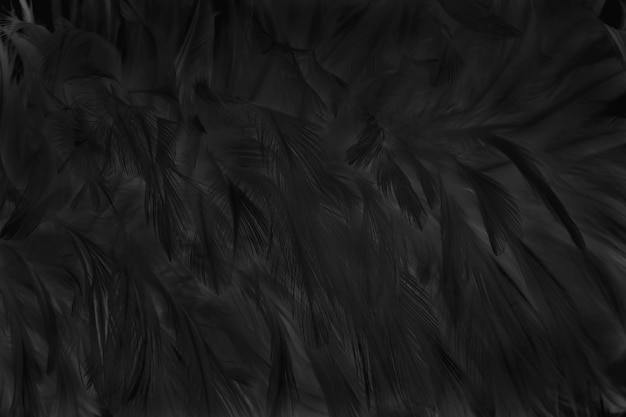Blur beautiful black grey bird feathers surface for background