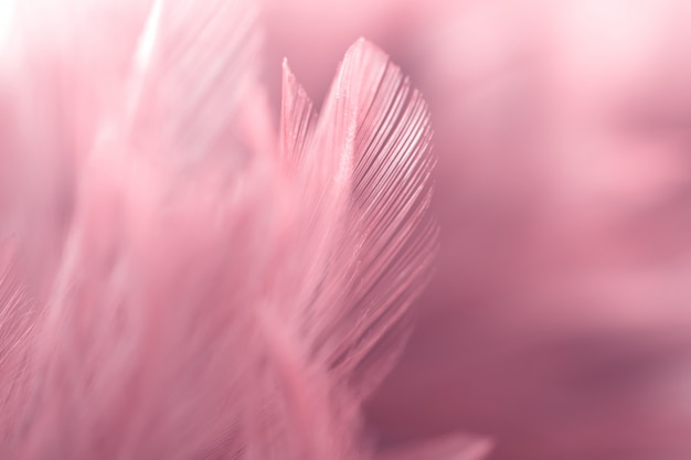 Blur bird chickens feather texture for background, fantasy, abstract, soft color of art design.