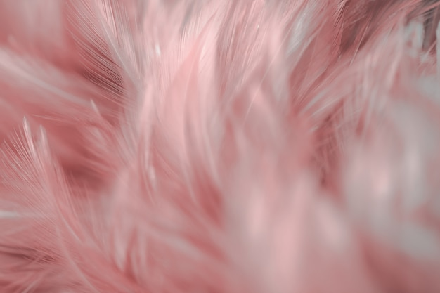 Blur bird chickens feather texture for background, fantasy, abstract