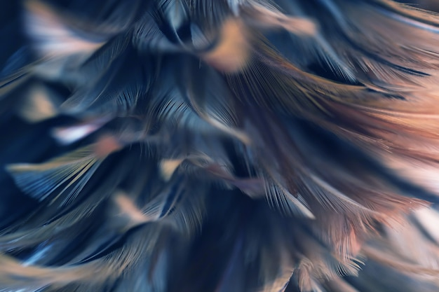 Blur bird chickens feather texture for background