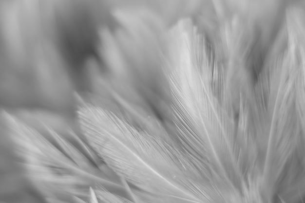 Blur bird chickens feather texture for background