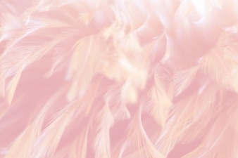 Blur Bird chickens feather texture for background, Fantasy