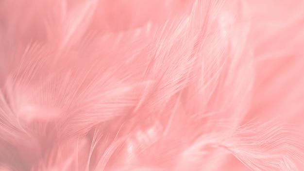 Blur bird chickens feather texture