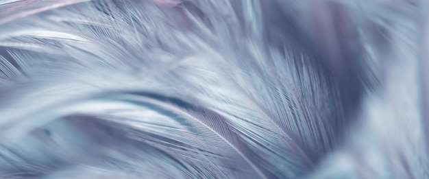 背景のぼかし鳥の羽のテクスチャ