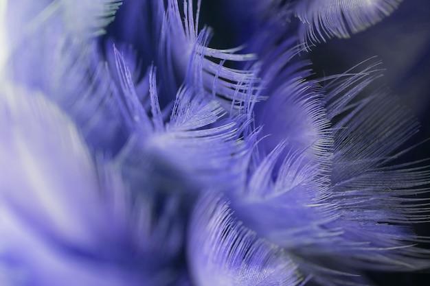 Blur blue bird's feathers