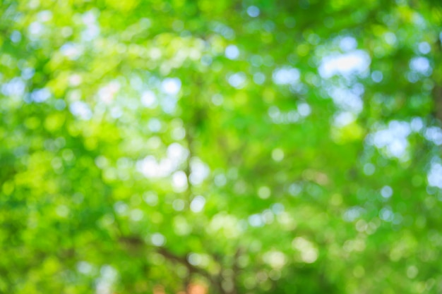Blur green tree nature summer bokeh background
