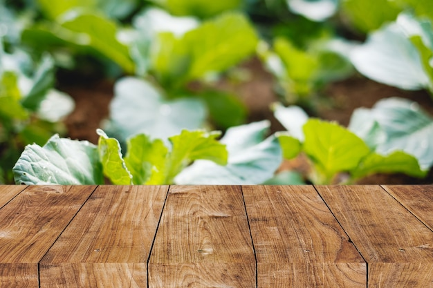 Blur home vegetable garden plant at backyard with wooden tabletop foreground space for natural advertising background