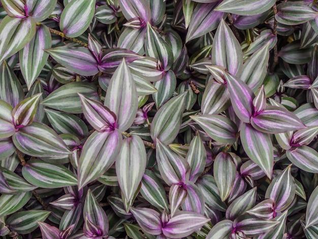 Blur leaf pattern background