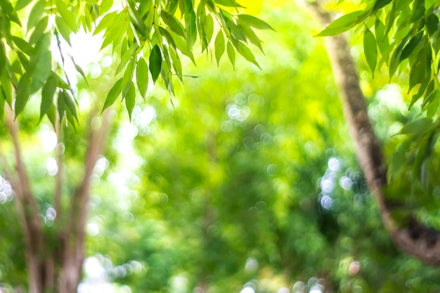 Размытие природа боке зеленый парк