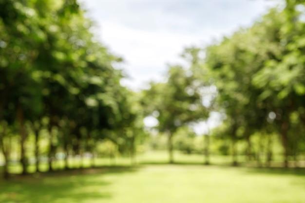 自然の緑と芝生の背景、屋外の庭の夏の公園の木をぼかし。
