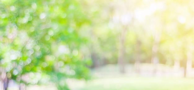 나뭇잎 밝은 배경, 자연 공원 흐림