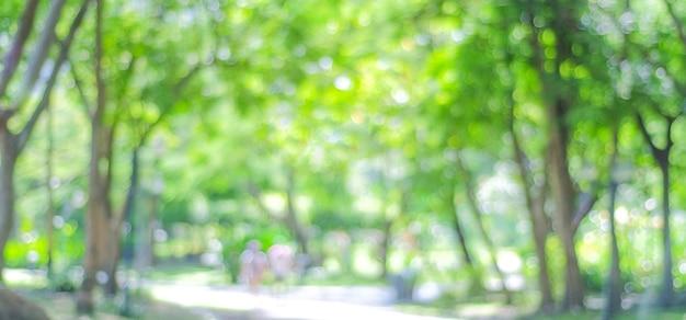나뭇잎 밝은 배경으로 공원을 흐리게