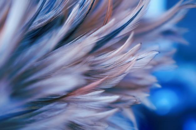 배경에 대 한 닭 깃털 질감의 스타일과 부드러운 색상을 흐리게, 다채로운 추상