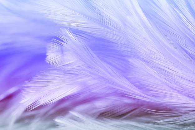 Blur styls and soft color of chickens feather texture for background, abstract colorful