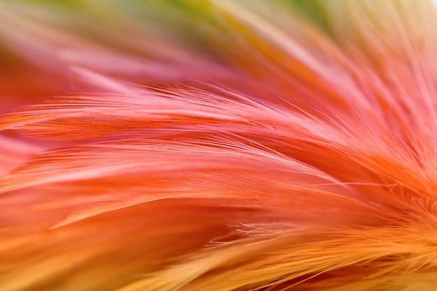 Мягкий цвет текстуры пера кур для фона, blur stys