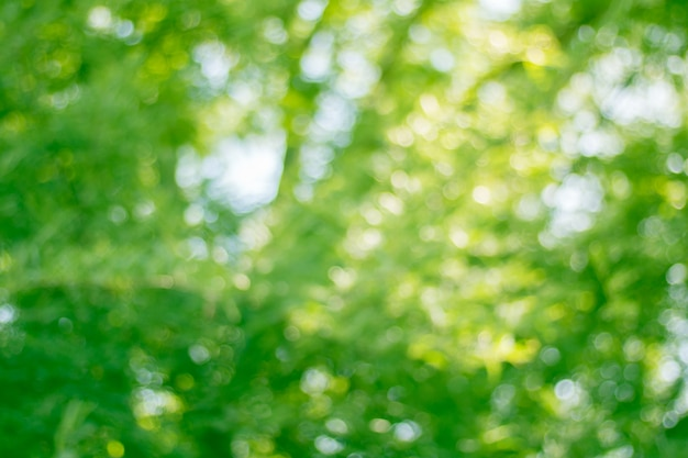 Blur of tree leaves for nature background and save green concept