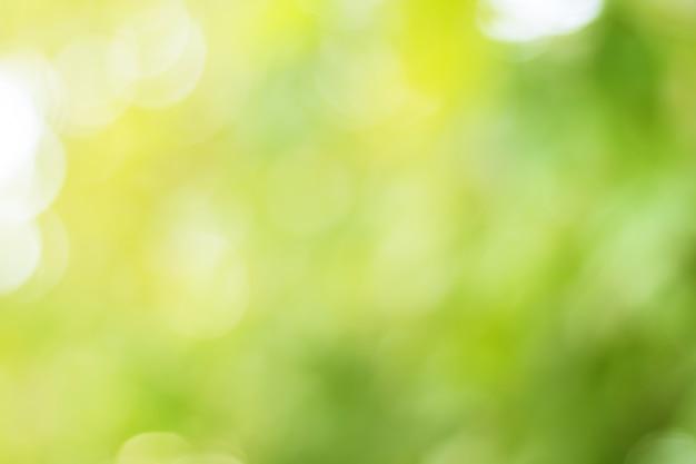 Blur из листьев дерева на фоне природы