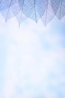 Blured背景にスケルトンの葉、クローズアップ