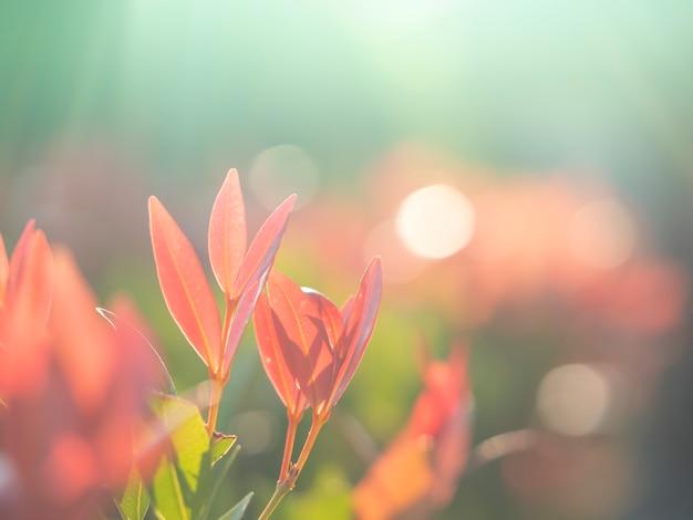 抽象的なbluredとソフトフォーカスの葉