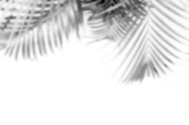 Размытые абстрактные серые тени пальмовых листьев, черно-белые монохромные тона