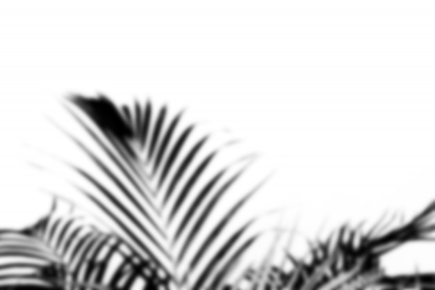 Blurred abstract gray shadow of palm leaves, black and white monochrome tone