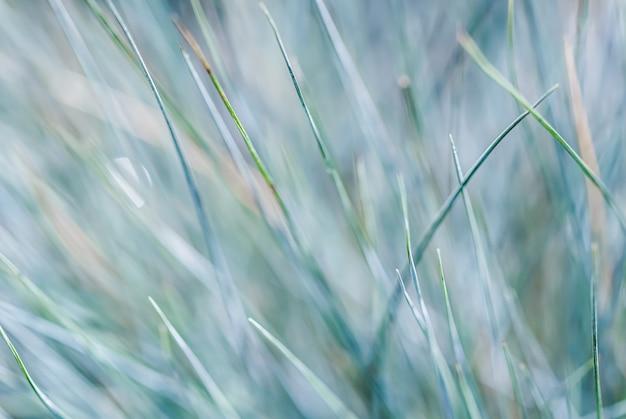 光の反射と青緑色の草の極端なボケ味のぼやけた背景テクスチャパターン