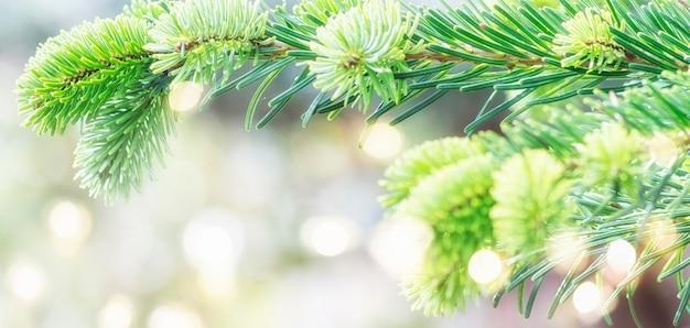 Размытый фон с елкой.