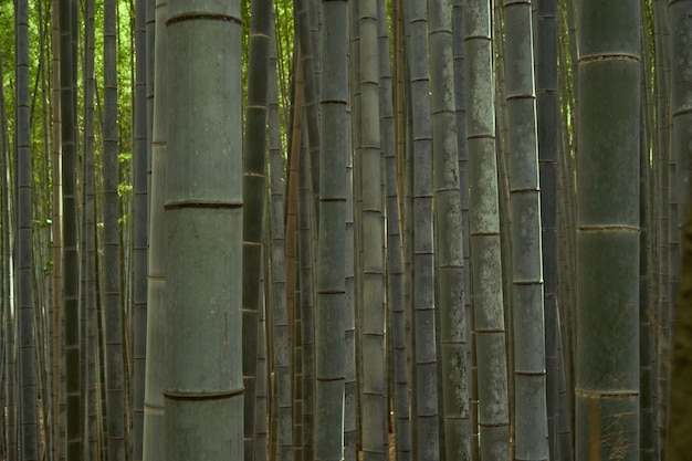Blurred bamboo forest