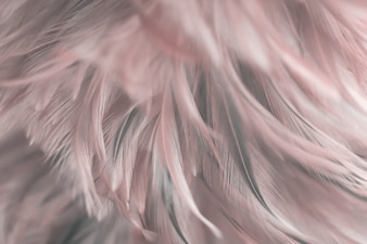 Blurred Bird and chickens feather texture for background