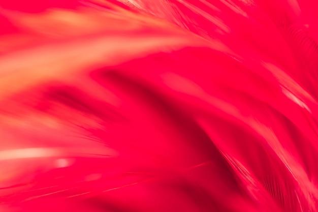 Blurred bird chickens feather texture