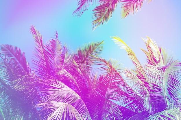 흐리게 다채로운 코코넛 야자수 프레임 파스텔 복고풍 색상 그라데이션 빛 다채로운 자연 배경입니다.