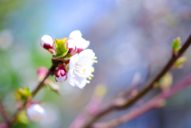 Blurred colorful spring flowers and a green bud as a blurred floral spring
