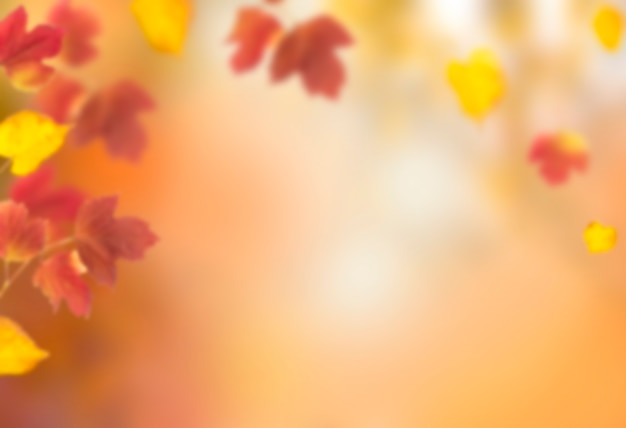 Blurred defocused autumn background can be used for design