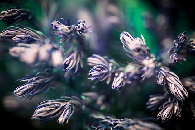 Blurred defocused  background with  leaves