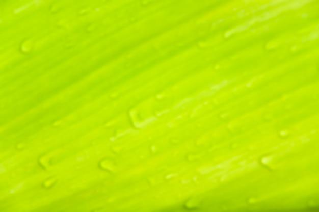 緑の葉にぼやけた露滴、背景のぼやけた緑の葉のテクスチャ抽象
