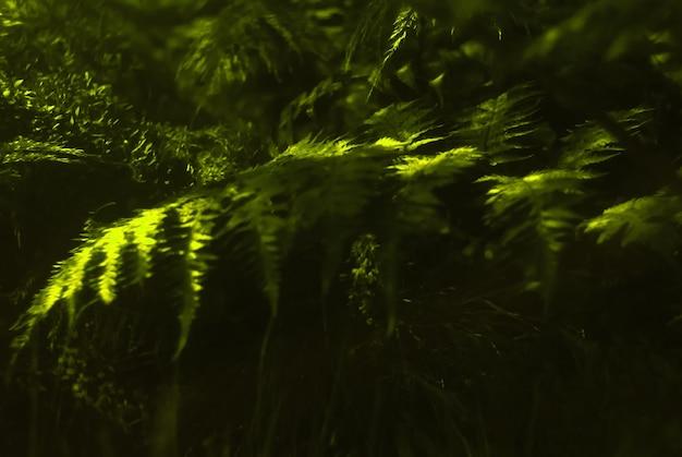ぼやけた花の背景-暗い下草のシダの葉の太陽フレア