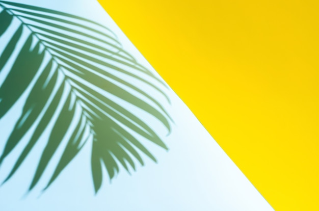 Blurred focus of coconut leaf shadow on blue and yellow background summer background concept