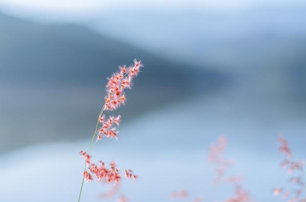 山と湖からの背景を持つローズナタール草のぼやけた焦点