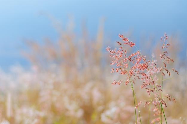 乾燥した葉と湖からの水からぼやけた茶色と青の色の背景を持つローズナタール草のぼやけた焦点