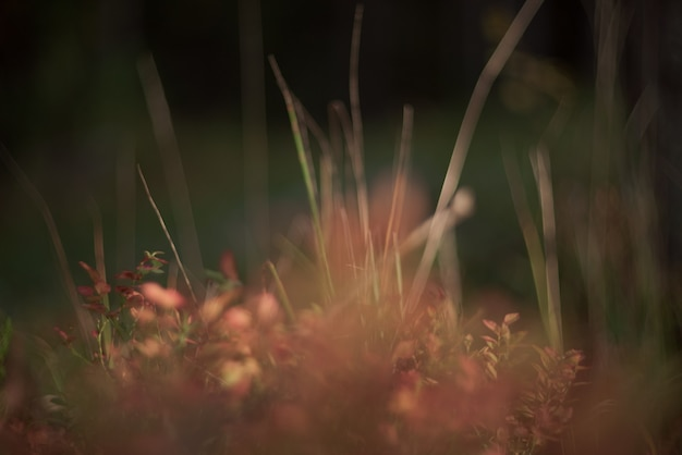 Blurred forest abstraction. beautiful forest vegetation in sunlight.